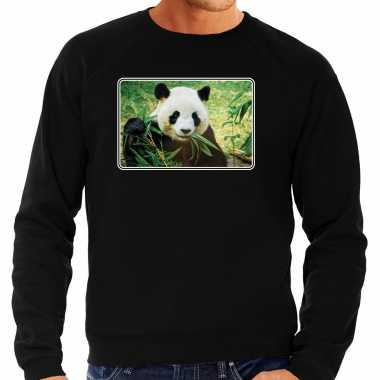 Dieren trui / trui pandaberen foto zwart heren